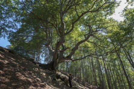 Il faggione di Pratignana (Parco del Frignano, Mo)