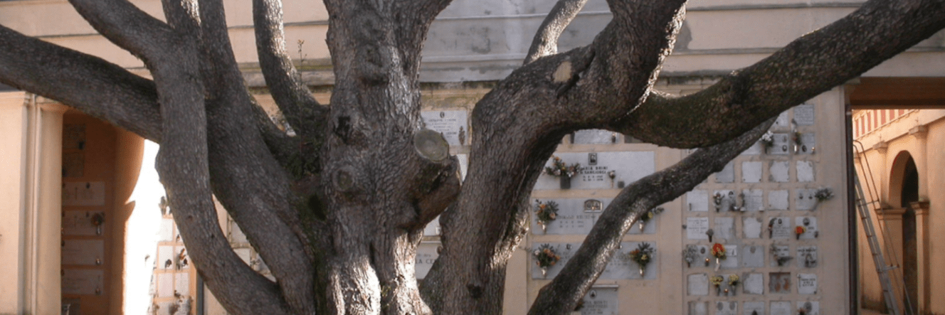 Gli alberi secolari raccontano Imola: dal Piratello ai boschi sulle prime colline fuori porta