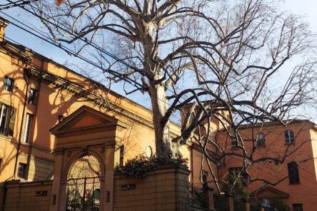 Bologna all'ombra dei Giganti Verdi