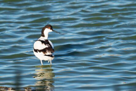 Birdwatching alla foce del Bevano (RA)